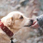 Liability Insurance for Dog Bite Claims Lynnwood, WA